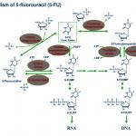 生物化学与分析生物学PPT素材