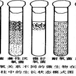 朱军微生物学中英文版期末考试及考研复习资料