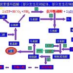首都师范大学考研生物化学知识点(图文)